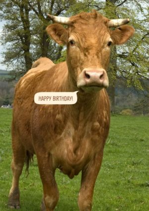 Birthday Card featuring a brown cow
