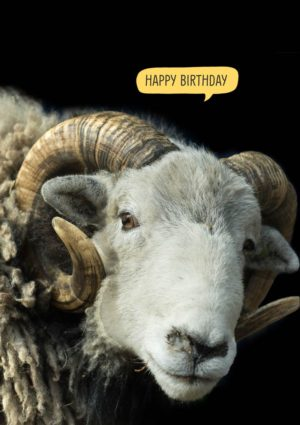 Herdwick ram with speech bubble 'Happy Birthday'