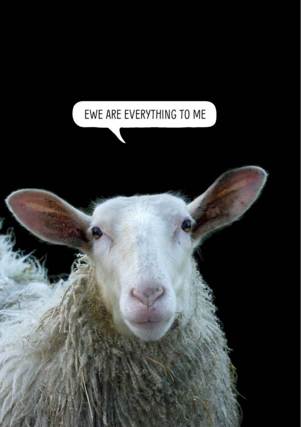 Sheep with text 'Ewe are everything to me'