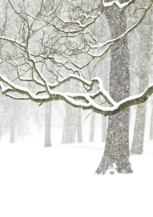 Branches greeting card featuring a photo of snow-laden branches.