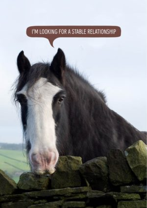 A horse leaning over a stone wall saying 'I'm looking for a stable relationship.'