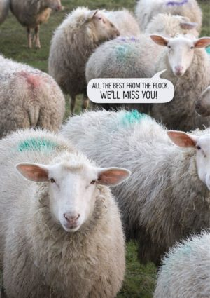 Leave - A leaving card featuring a flock of sheep and text 'All the best from the flock - we'll miss you.'