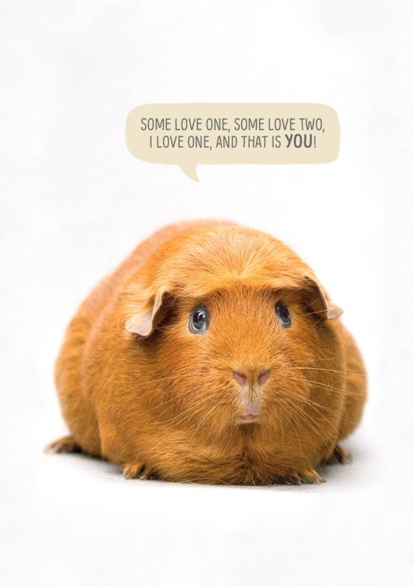One Love Greeting Card with a guinea pig and a speech bubble saying 'Some love one, some love two. I love one and that is you!