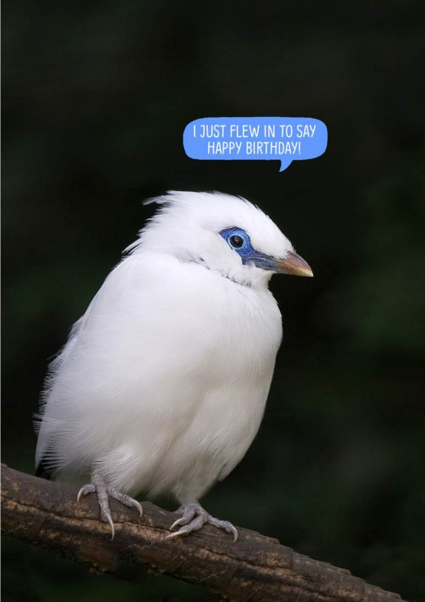 Bali Starling Greeting Card with text 'I just flew in to wish you Happy Birthday'