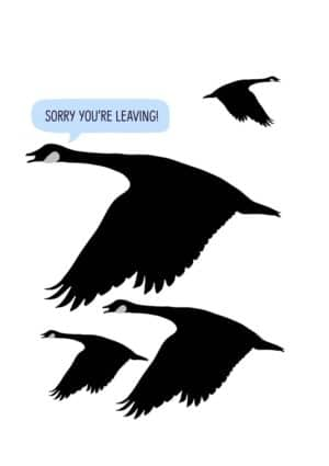 birds flying and text 'Sorry You're Leaving'
