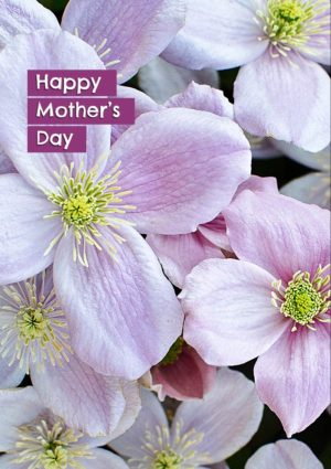 Pink Clematis greeting card for Mother's Day card with a message that reads, I'm tickled pink that you're my mother!