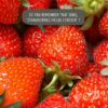 strawberries with text 'Do you remember that song, 'Strawberry Fields Forever?'