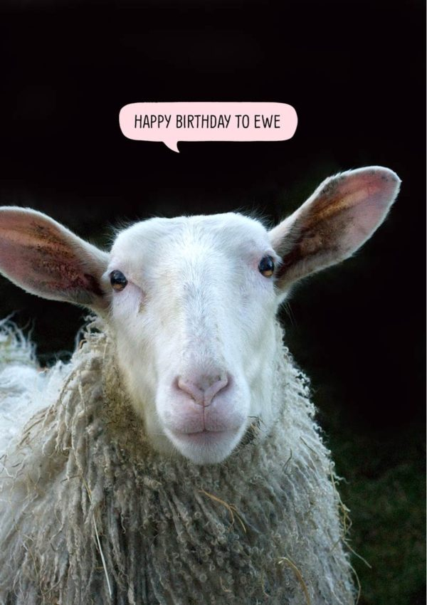 Sheep with speech bubble 'Happy Birthday To Ewe'