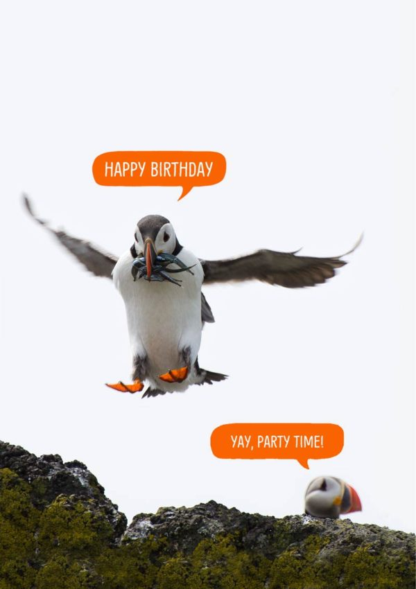 Puffin Party - puffins on the Isle Of May and speech bubbles and text, 'Happy Birthday' and 'Yay, Party Time'