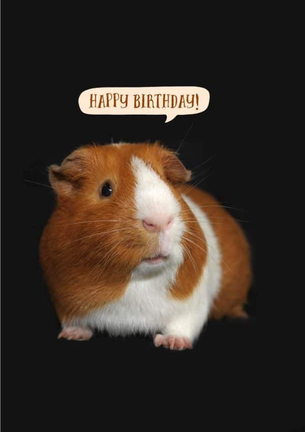 Happy Day Greeting Card with a guinea pig with a speech bubble and text, 'Happy Birthday!'