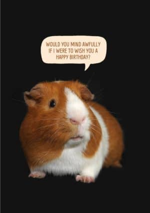 Butterscotch Guinea Pig Greeting Card with a guinea pig with butterscotch and white colouring, set against a dark background and with a speech bubble and text, 'Would you mind awfully if I were to wish you a happy birthday?'