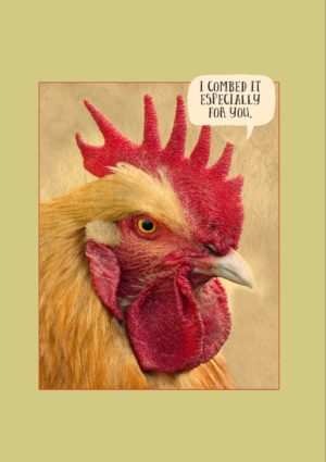 a cockerel with a magnificent red comb, and text that reads, 'I combed it specially for you.'