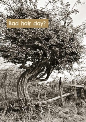 Twisted, gnarled tree with wayward branches and twigs, and text 'Bad Hair Day?'