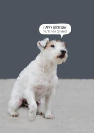 Dog with text, 'Happy Birthday (you're 190 in dog years'