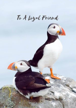 A greeting card featuring two puffins on a rock, one sitting and one standing, and text 'To A Loyal Friend'