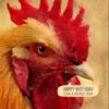 A cockerel and text 'Happy Birthday - Cock A Doodle Doo'