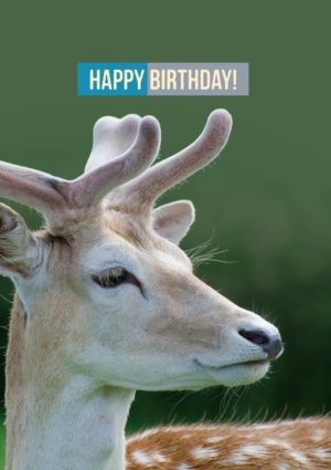 A fallow deer with velvet antlers and an imperious look, and text 'Happy Birthday'