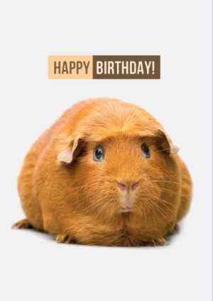 Piggy greeting card with a gentle guinea pig or piggy and text, 'Happy Birthday'