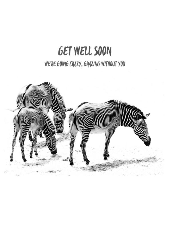 A trio of zebras and text 'Get Well Soon - We Are Going Crazy, Grazing Without You'