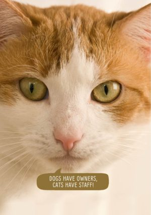 A cat and text 'Dogs Have Owners, Cats Have Staff'