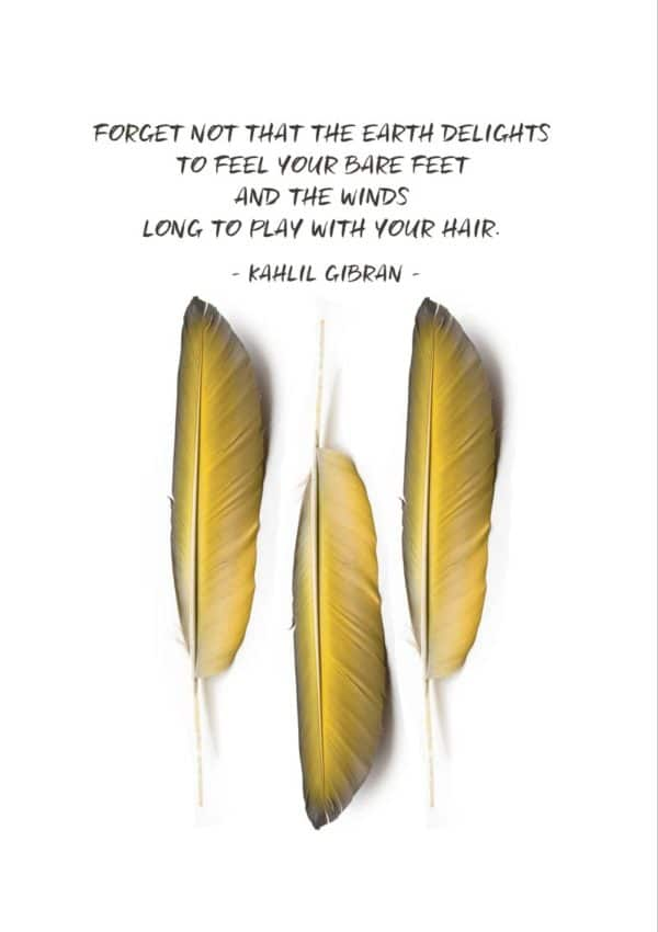 Three delicate, golden feathers and a quote from Kahlil Gibran 'Forget not that the earth delights to feel your bare feet and the winds long to play with your hair.'