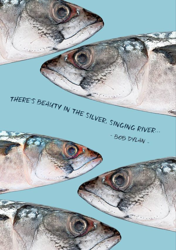 fish in the stream and a quote from a Bob Dylan song: 'There's Beauty in the Silver, Singing River'