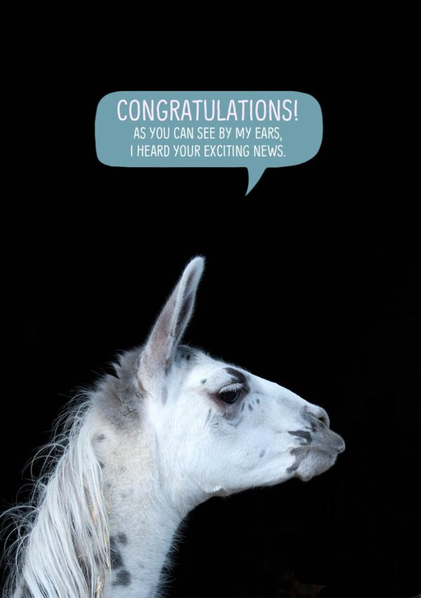 A llama in profile against a dark background with ears pricked and pointed forward with text 'Congratulations - as you can see by my ears, I heard your exciting news.'