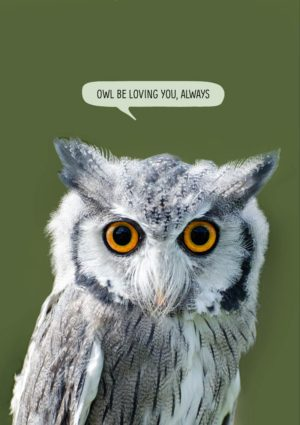 A Romantic greeting card featuring a Scops Owl and text 'Owl Be Loving You Always'