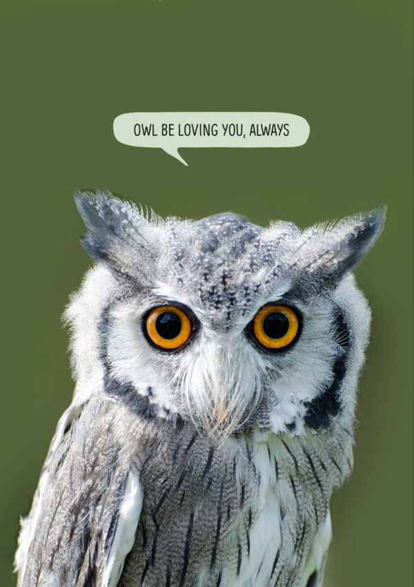 A Scops Owl and text 'Owl Be Loving You Always'