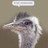 A rhea and text 'By Jove, Congratulations'