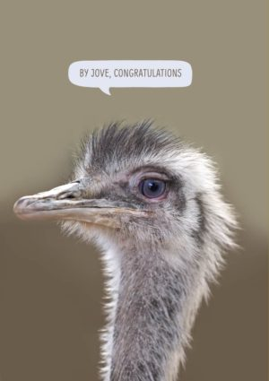 By Jove text and Congratulations in a speech bubble, being said by a rhea showing its head and neck.