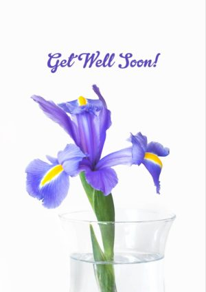 An iris in a glass vase with its petals outstretched in an embrace, with text 'Get Well Soon'