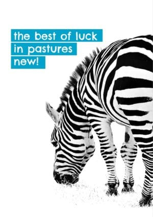 A leaving card with a zebra grazing with text 'The Best Of Luck In Pastures New' - to leave is to find new beginnings