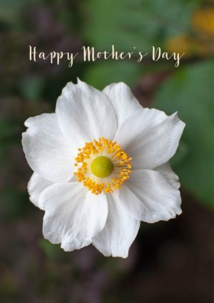 Japanese anemone with text 'Happy Mother's Day'