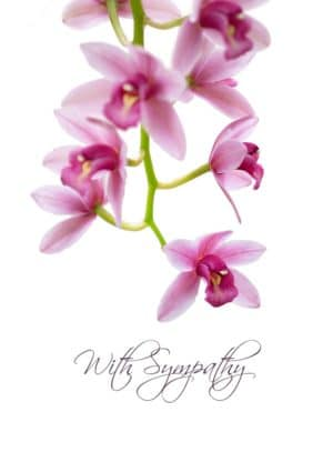 A cymbidium orchid with text 'With Sympathy'