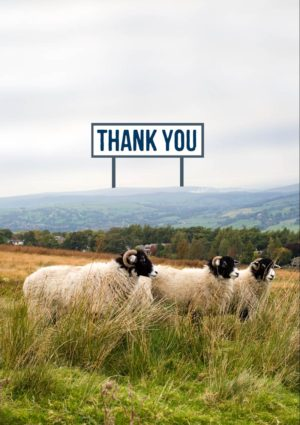 Sheep in a field in hilly country, with a billboard and text 'Thank You'