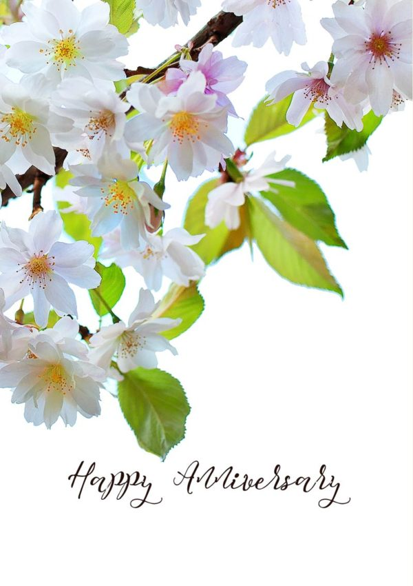Cherry blossoms with white and pink petals and text 'Happy Anniversary'.