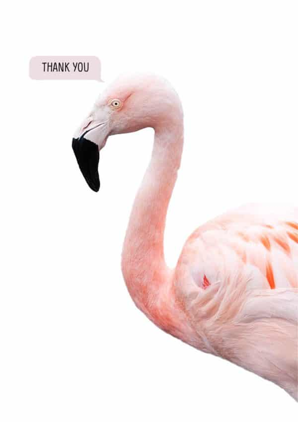 A flamingo and text 'Thank You'