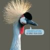 A Grey crowned crane and speech bubble with text 'Congratulations - Go Strut Your Stuff'