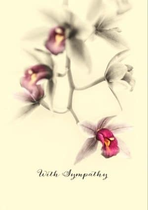 A toned image of a Cymbidium orchid and text 'With Sympathy'