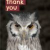 A winking Scops owl and text 'Thank You' wink wink