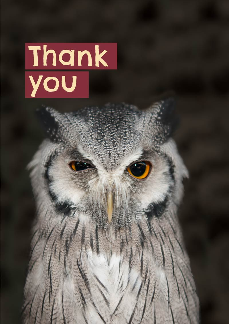 A Thank You Card Featuring A Wink Of A Scops Owl And Text Thank You