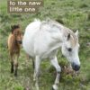 Two ponies - A Dartmoor pony and its youngster walking behind with text 'A Warm Welcome To The New Little One'