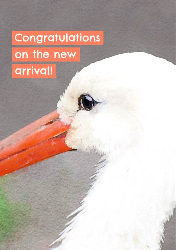 White stork close up with text 'Congratulations on the new arrival'