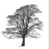 A lone tree in a snow-laden, wintery landscape.