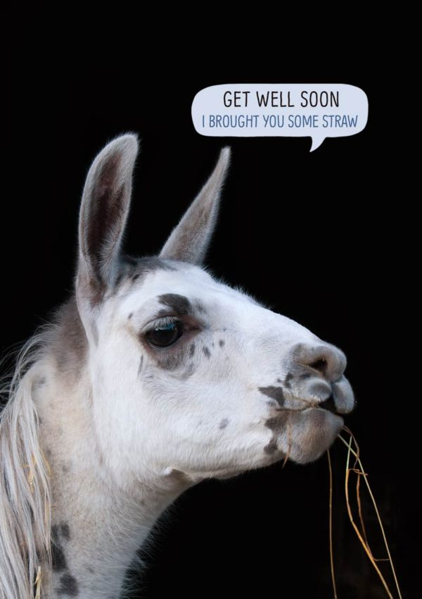A llama with straw dangling from its mouth and a speech bubble and text 'Get Well Soon - I Brought You Some Straw'