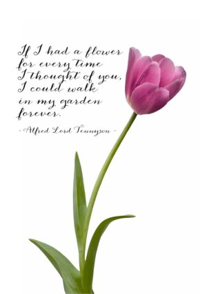 A single deep pink tulip and a quotation from Alfred Lord Tennyson 'If I had a flower for every time I thought of you, I could walk in my garden forever.'