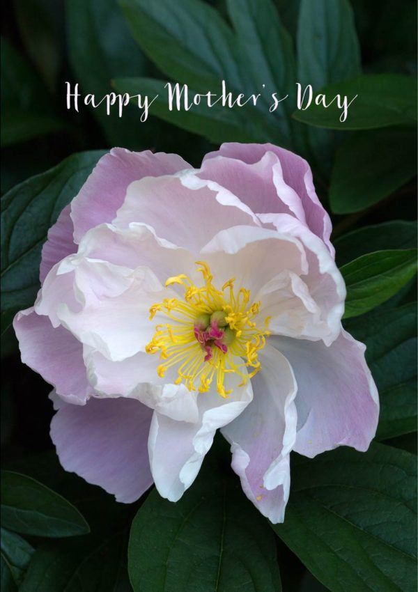 A pink peony in full bloom with open petals and text 'Happy Mother's Day'