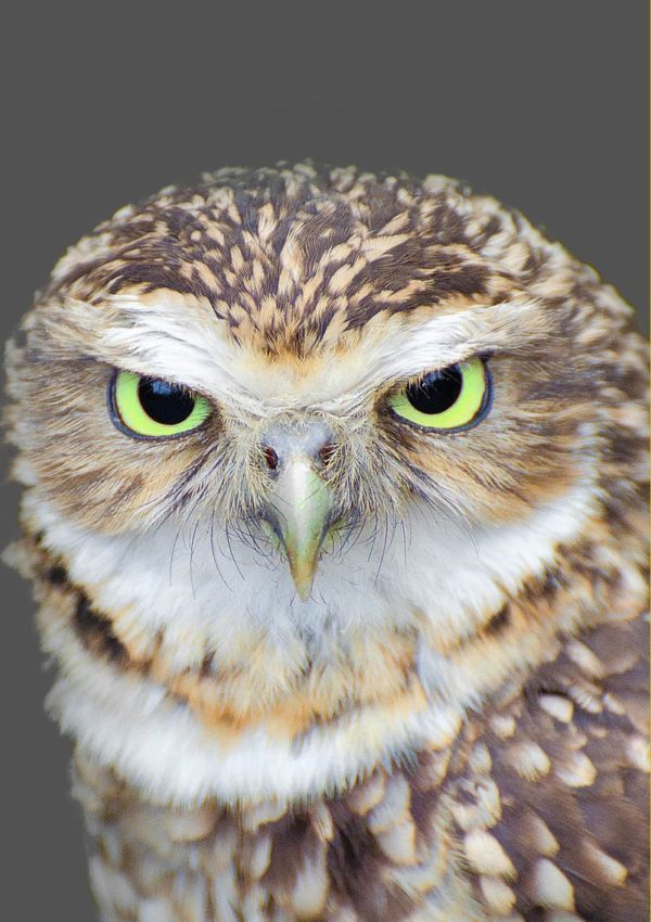 A Green Eyes Greeting Card for any occasion featuring a closeup of an owl with green eyes.