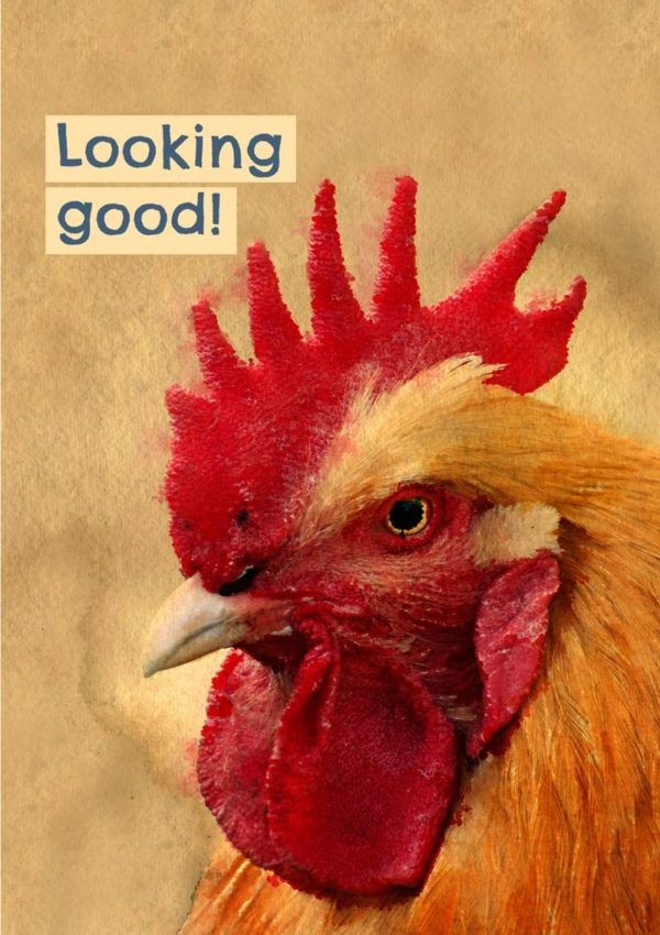 A cockerel resplendent in ruby-red wattle and text 'Looking Good'